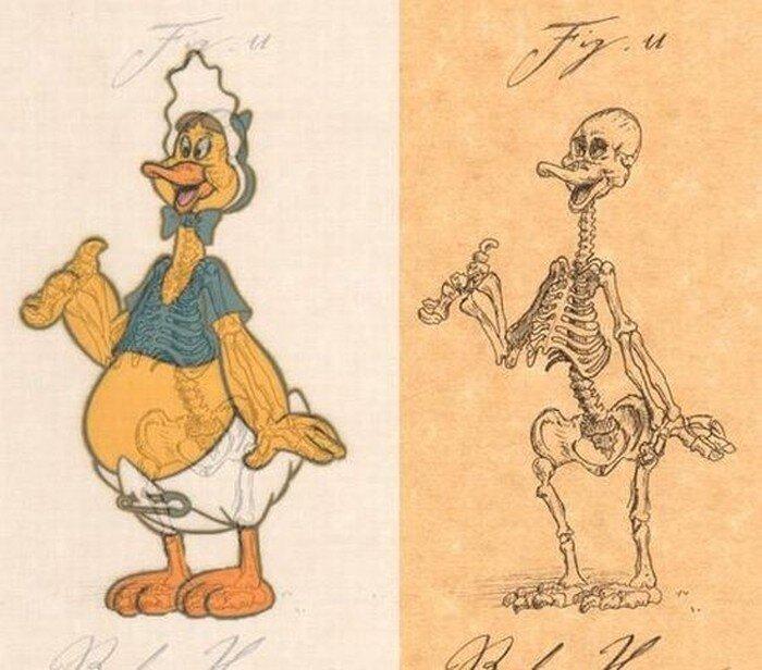 Анатомия мультяшных персонажей (21 фото)