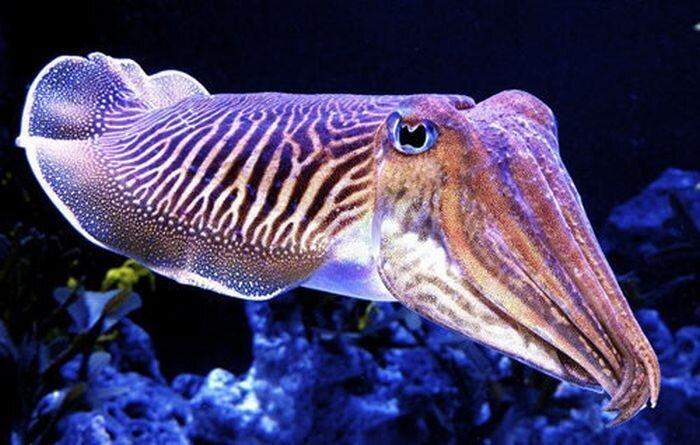 Подводная красота (40 фото)