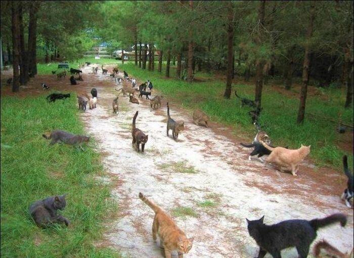 Вот так живут бездомные коты (42 фото)