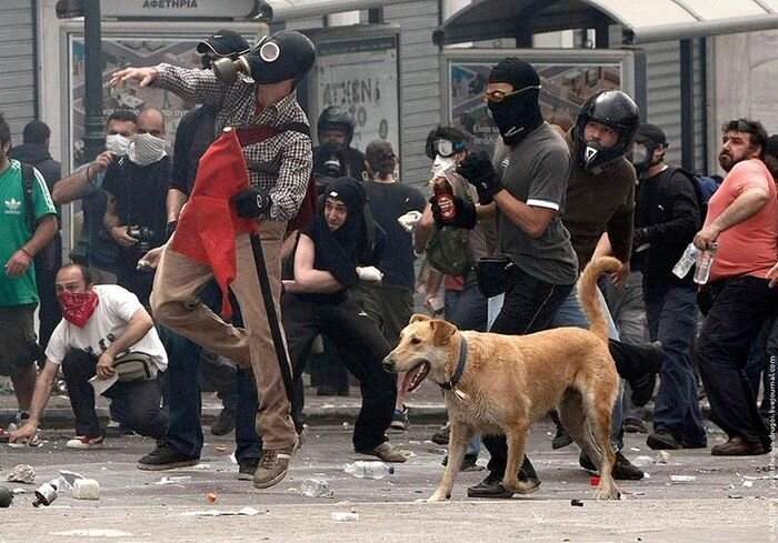 Несогласный пёс Сосиска (56 фото)