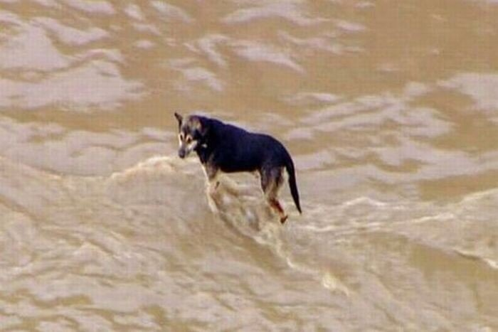 Спасение собаки  (15 фото)