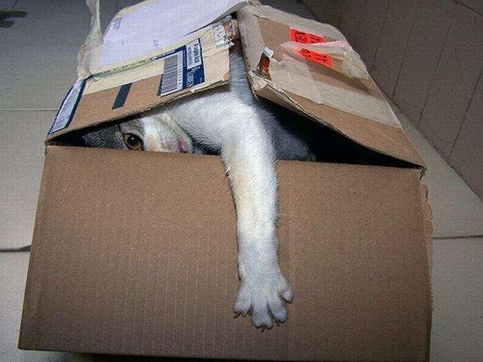 Куда же мне пристроить кота? (50 фото)