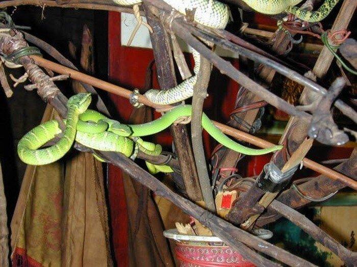 Змеиный храм  (11 фото)