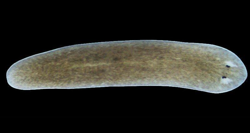 Магнитное поле влияет на регенерацию тканей