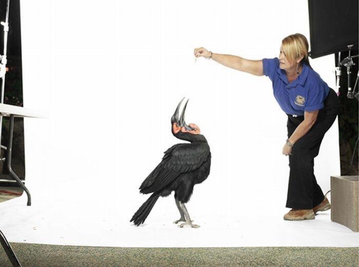 Редкие фотографии птиц (9 фото)