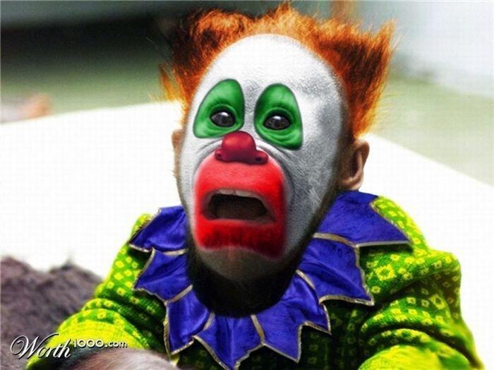 Фотожаба животных-клоунов (19 фото)