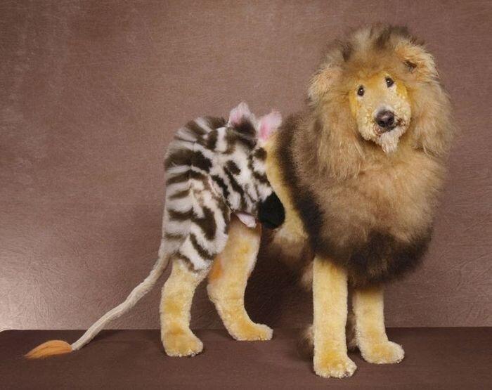 Креативный собачий парикмахер (12 фото)