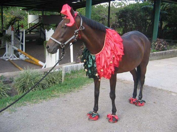 Лошадки в модных нарядах (18 фото)