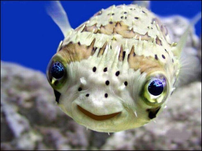 Различные виды рыб с человеческими лицами (29 фото)