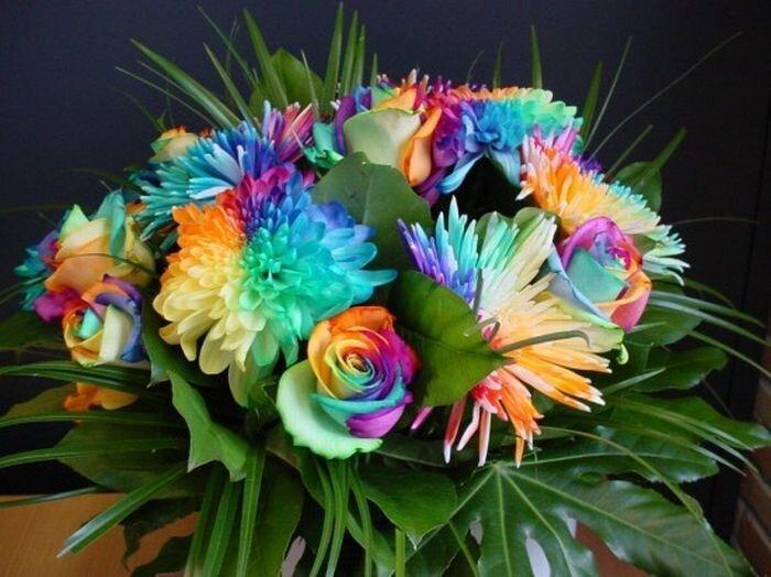 Цветы с разноцветными лепестками (19 фото)