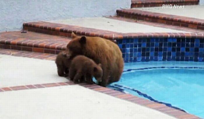 Медвежата пришли в гости к людям (10 фото)