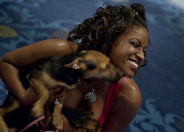 Собачий в отеле «Хилтон» (21 фото)