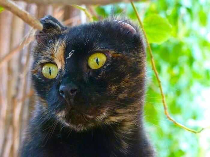 Уличные коты (15 фото)