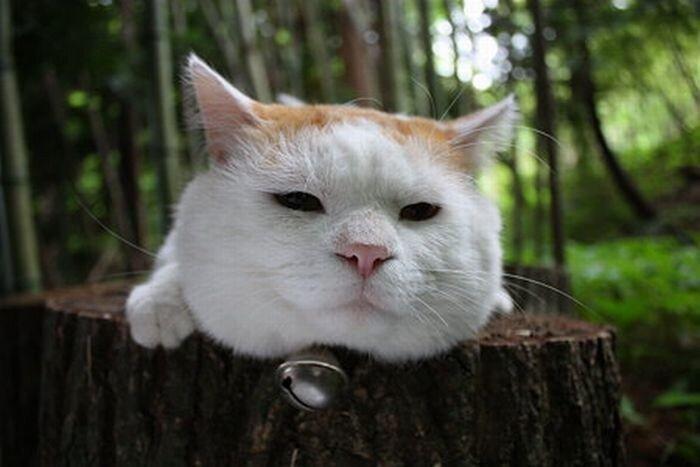 Самый ленивый кот в мире (25 фото)