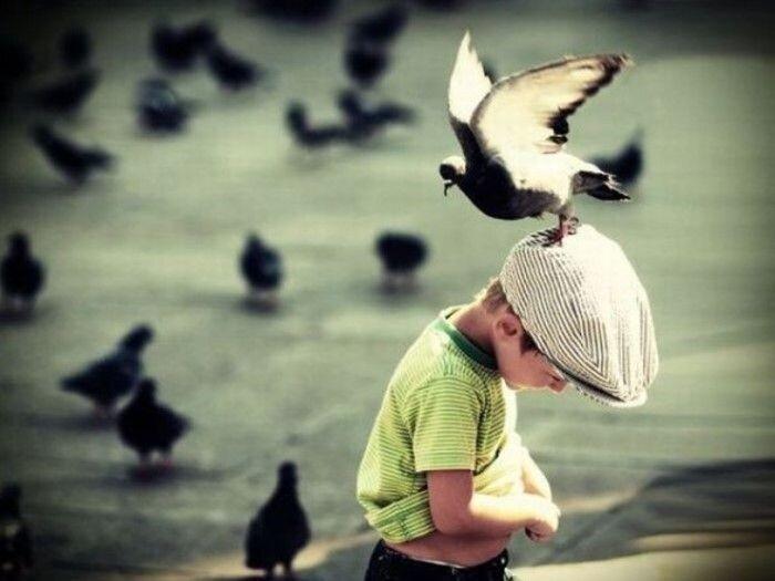 Птицы атакуют  (18 фото)