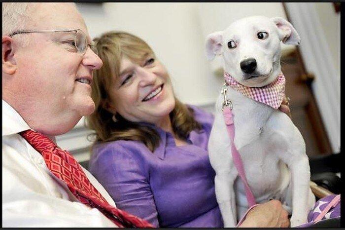 Конгресс США открыл двери для собак (29 фото)