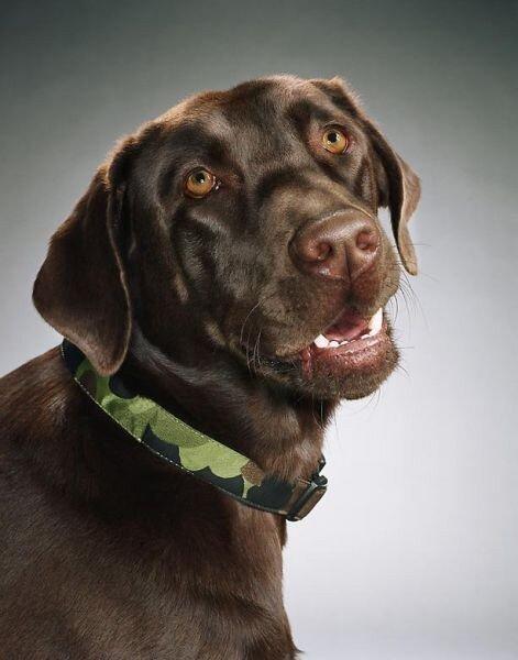 Прикольные портреты собак (24 фото)