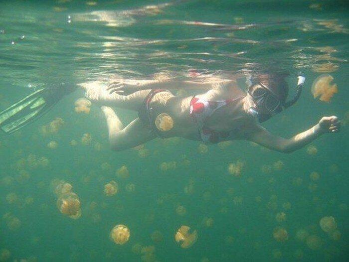 Озеро с медузами (19 фото)