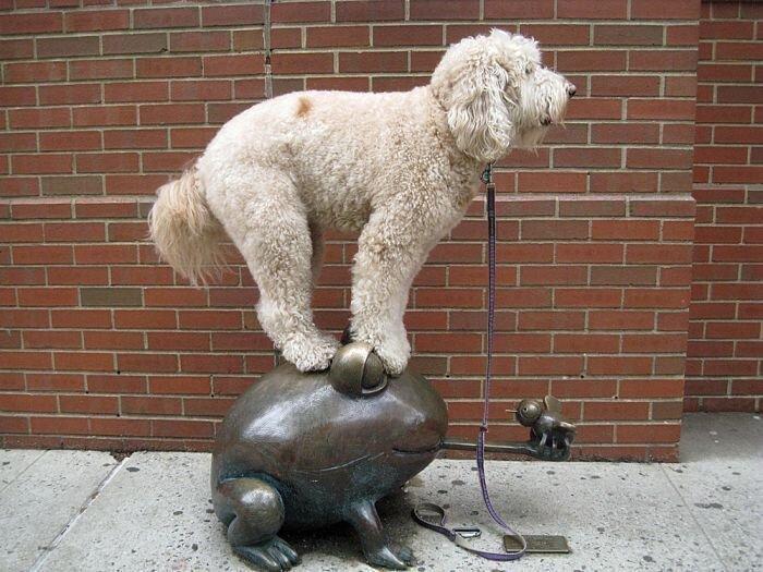 Собака отлично балансирует (30 фото)