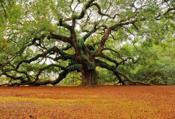 Уникальные деревья (16 фото)