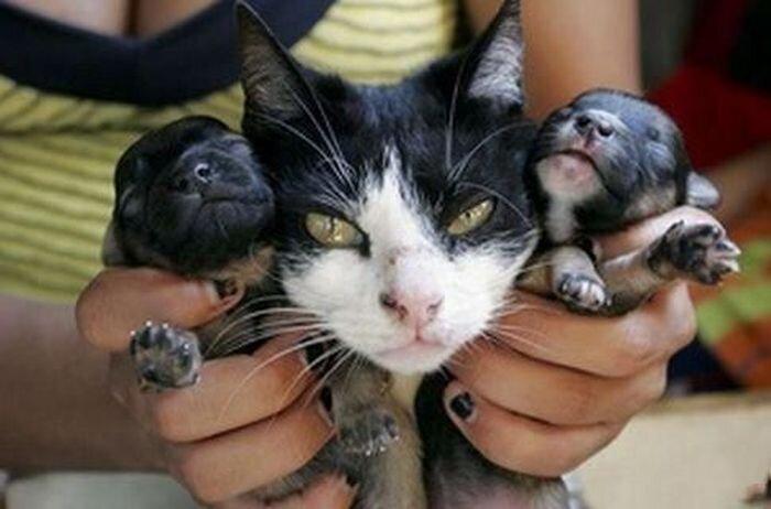 Кошка, которая родила щенка (6 фото)