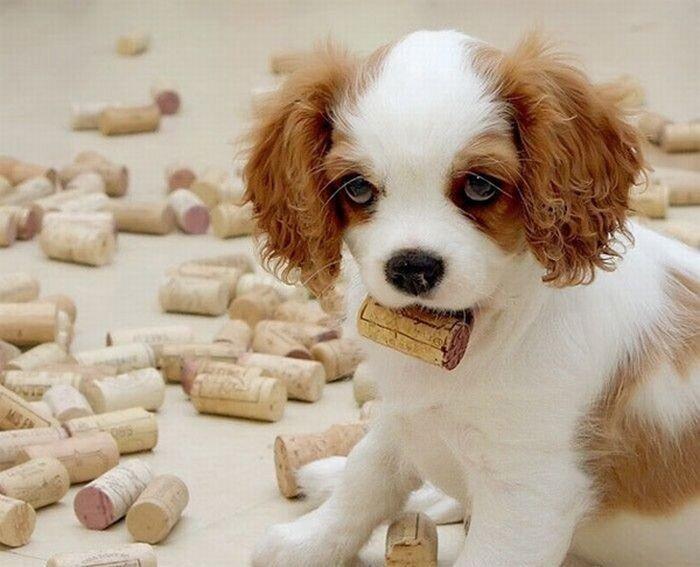 Забавные щенки (25 фото)