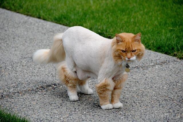 Кот и жара (2 фото)