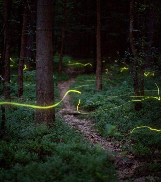 Игры со светом (20 фото)