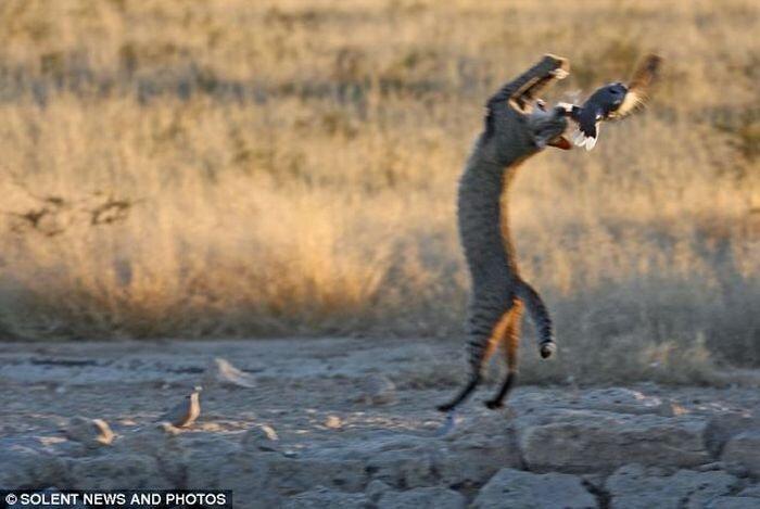Кошка-охотник (4 фото)