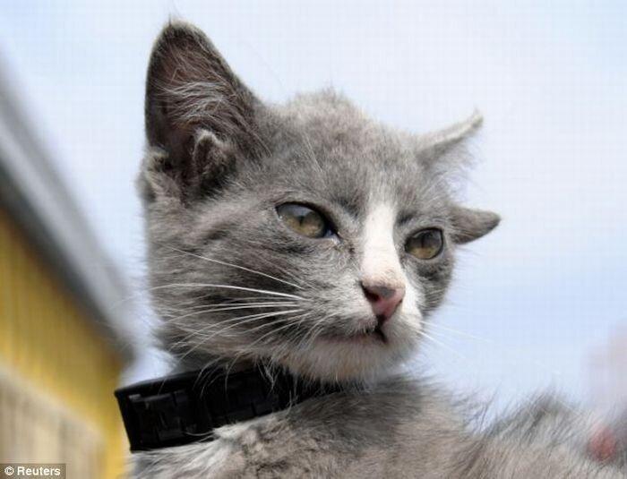 Четырехухий котёнок (6 фото)