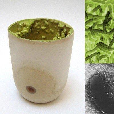 Кружки с бактериями (6 фото)