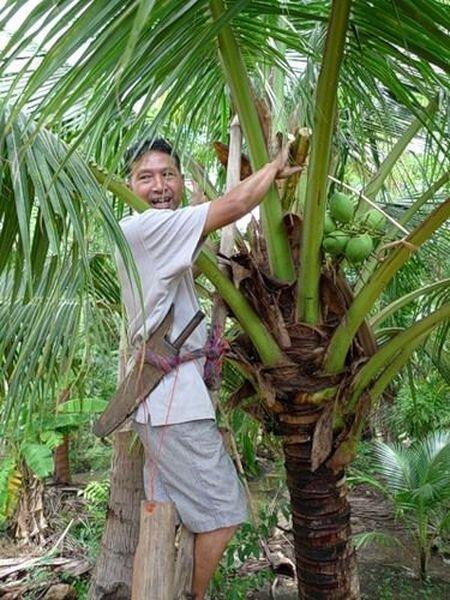 Производство сахара в Таиланде (11 фото)
