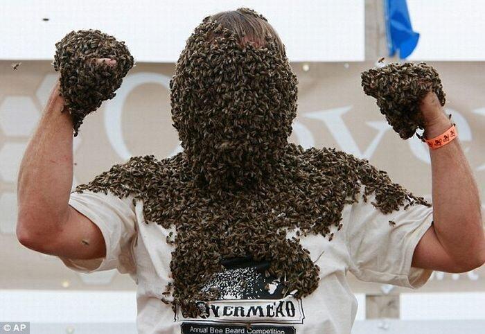 Пчелы повсюду (6 фото)