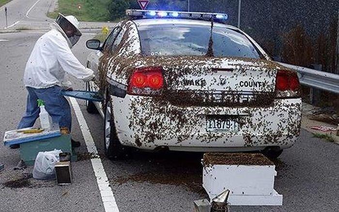 Полицейского атаковали 50 тысяч пчел (2 фото + видео)