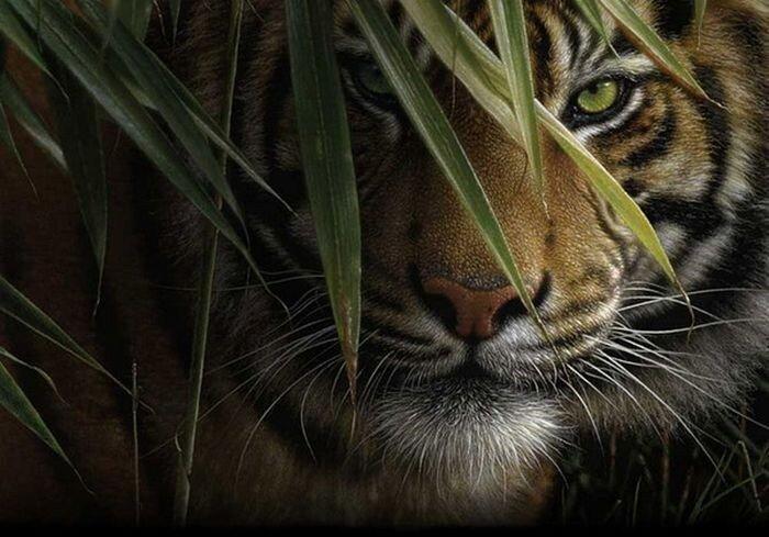 Рисунки дикой природы (20 фото)