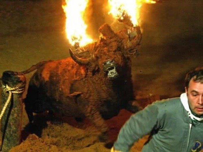 Бык из ада (6 фото)