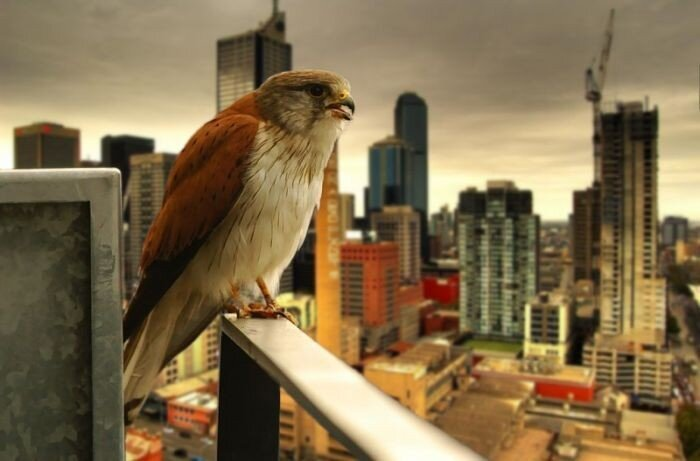 Фотографии птиц (41 фото) (41 фото)