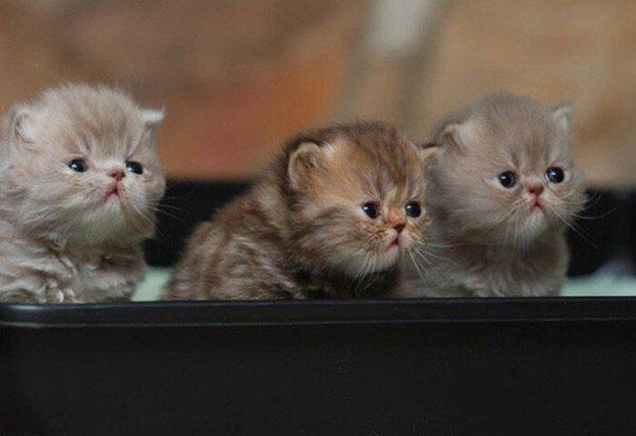 20 мусипусечных фотографий котят (20 фото)
