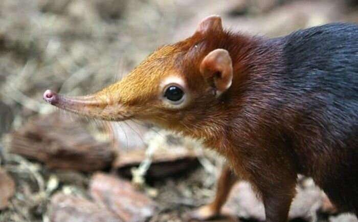 Забавные носы животных (12 фото)