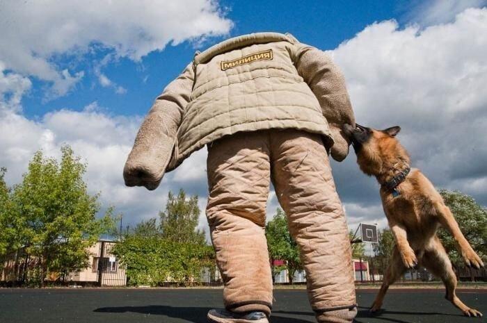 Собаки МВД (45 фото)