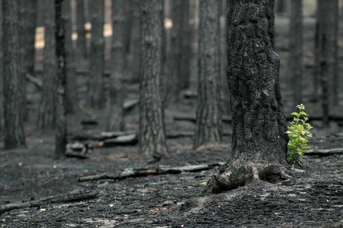 Мертвый лес (11 фото)