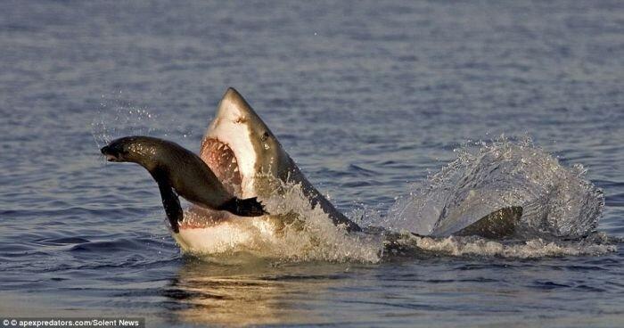 Счастливый тюлень избежал смерти (3 фото)