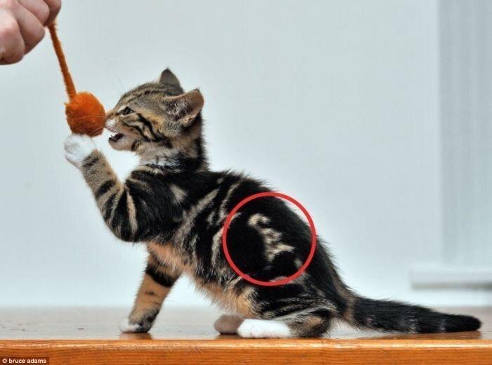 """Котенок со словом """"cat"""" на боку (3 фото)"""