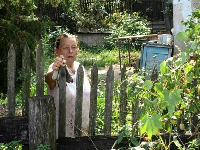 Соседка истерит из-за того, что я собираю урожай с ее деревьев, которые переросли на мой участок