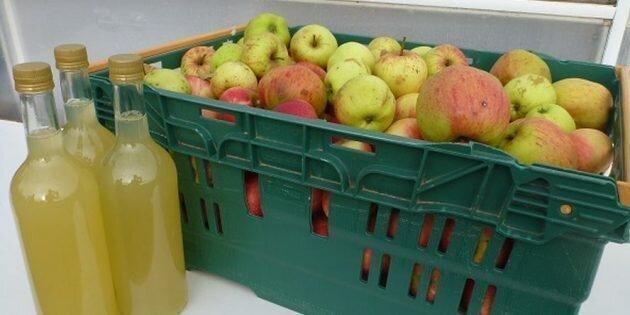 Как сделать яблочный сидр в домашних условиях