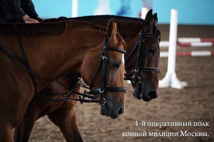 1-й оперативный полк конной милиции Москвы (33 фото)