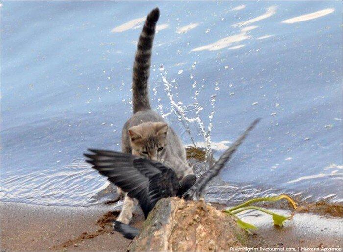 В погоне за голубем (5 фото)