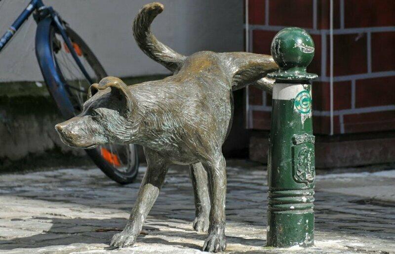 Не мешайте собакам ходить в туалет! Или почему владельцы не следят за собаками на прогулке?