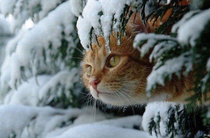 Зима и кошки (15 фото)