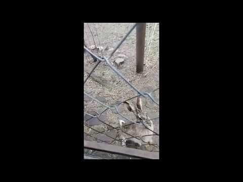 Боевой заяц Алёша